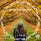 Een dame met een witte hoed op de rug bezien, kijkt in in een tunnel van herfstbomen.
